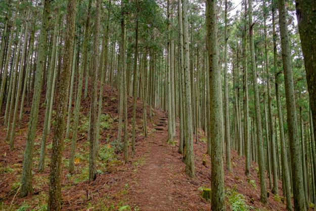 kiriyama-1509