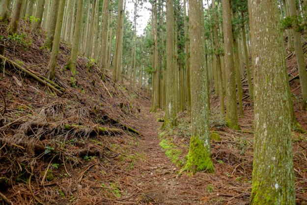 kiriyama-1519
