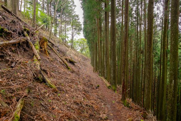 kiriyama-1528