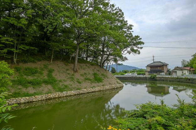 tsutsuji-4185