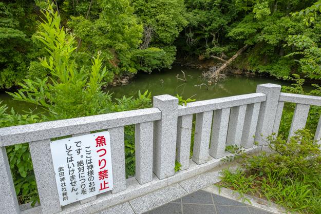 tsutsuji-4193