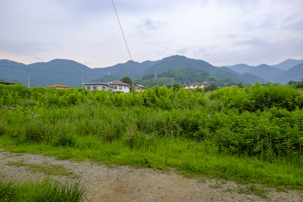tsutsuji-4278