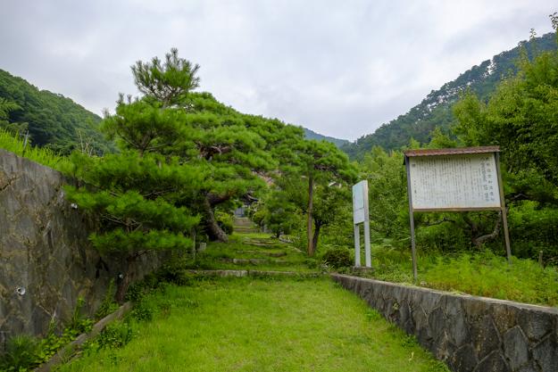 tsutsuji-4288