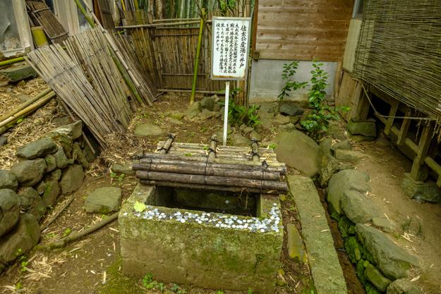 tsutsuji-4299
