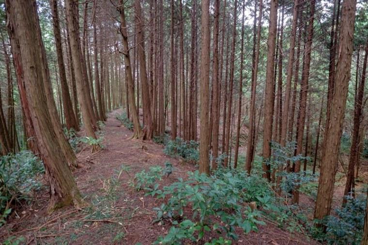 kokashingu-jo-8275