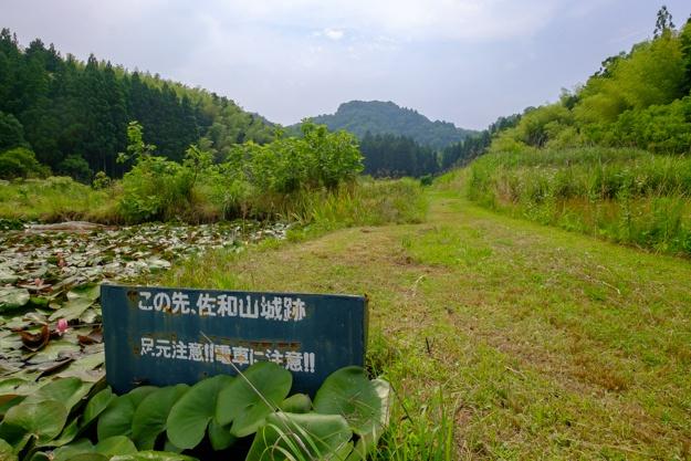 sawayama3-7555
