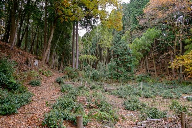 tsuchiyama-3301
