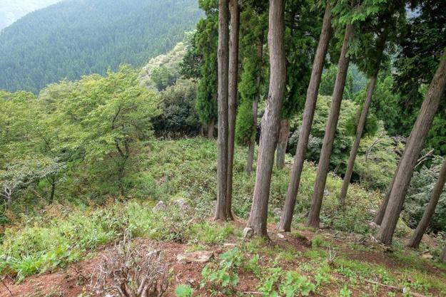 wakasa-onigajo-0717