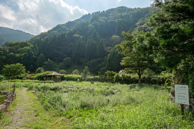 wakasa-onigajo-0884