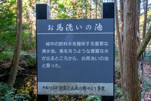 hinosakura-4921