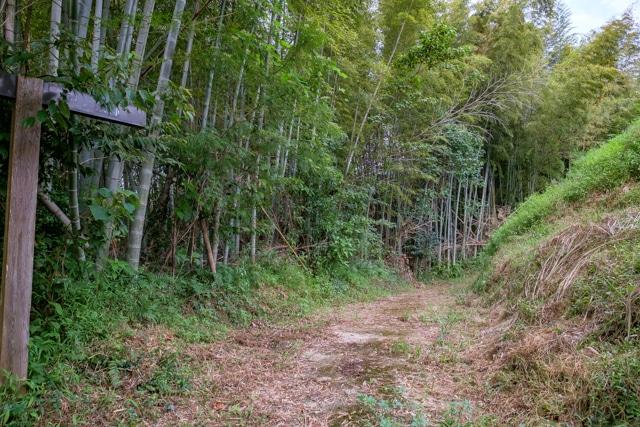 tonokoori-3365