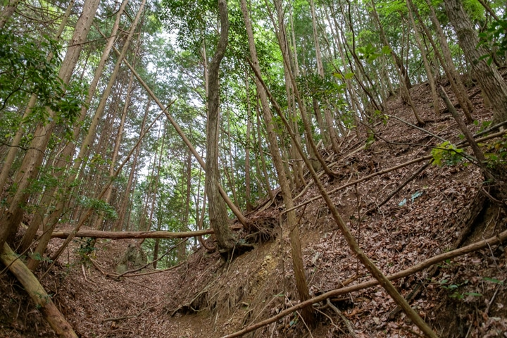kaburamaru-0901