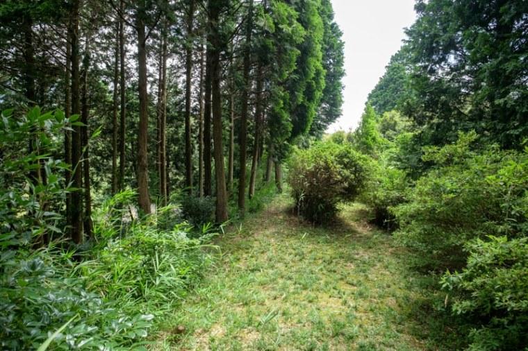 fukuchijo38-4119