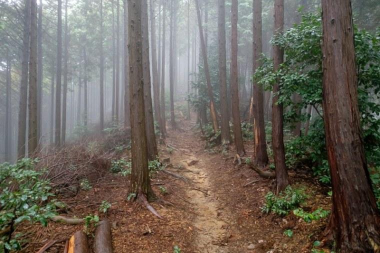 bodaiyama-jo_18-6934