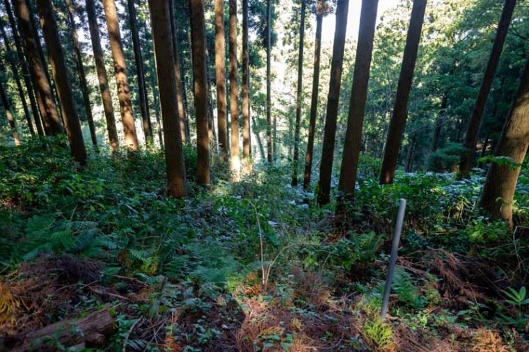 ichijouji-jo-6898