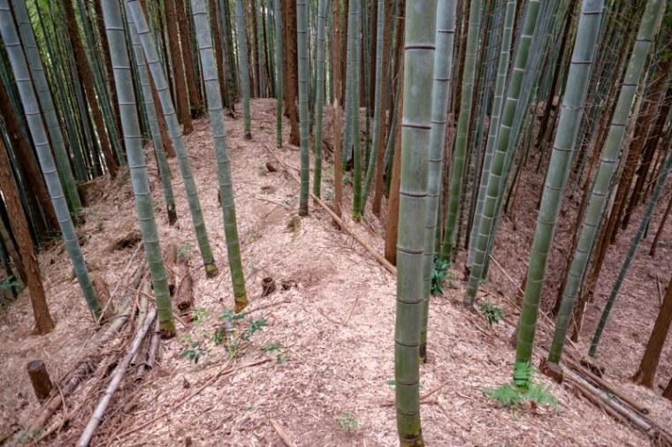 mochizuki-jo_12-8090