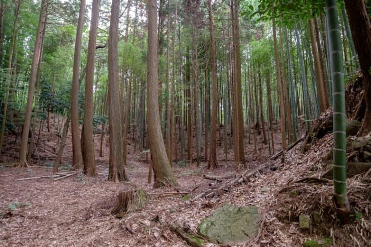 mochizuki-jo_16-8102