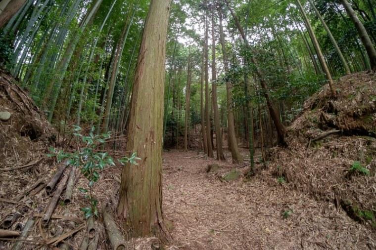 mochizuki-jo_17-8110