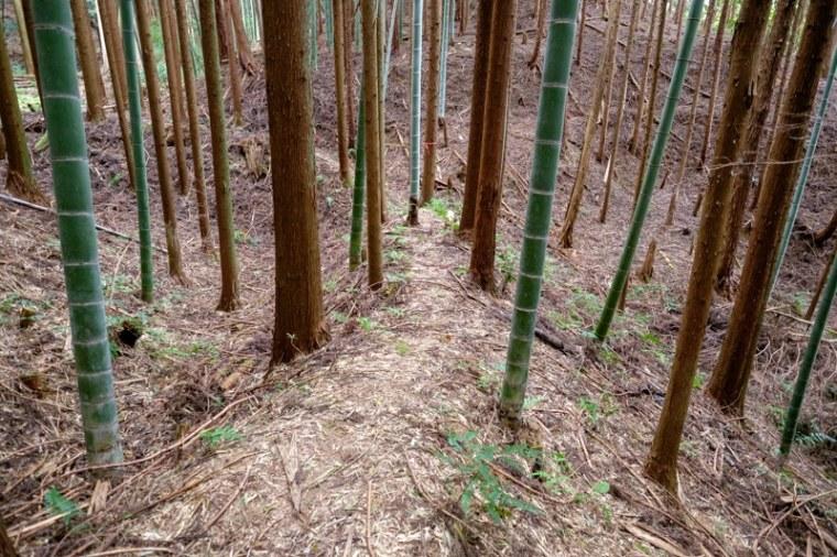 mochizuki-jo_26-8134
