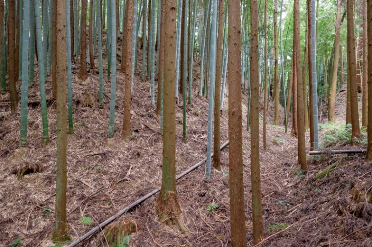 mochizuki-jo_27-8138