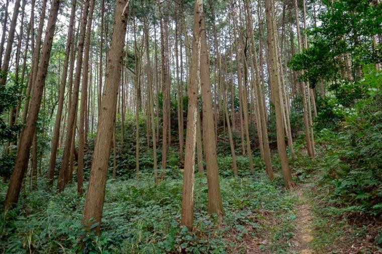 murasame_05-8228