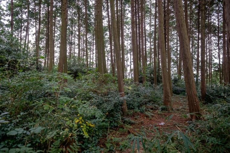 murasame_21-8215