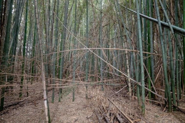 takenaka-jo_04-8302