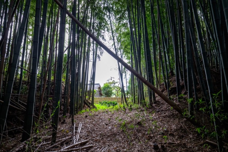 takenaka-jo_07-8303