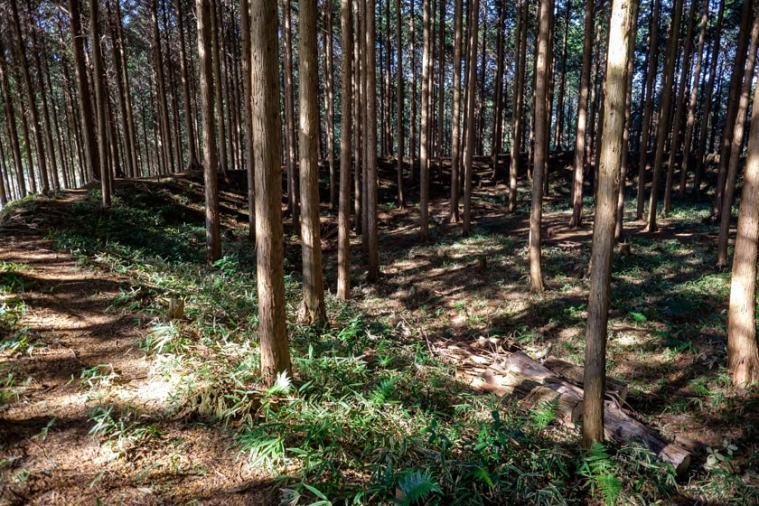furumiya_58_9984