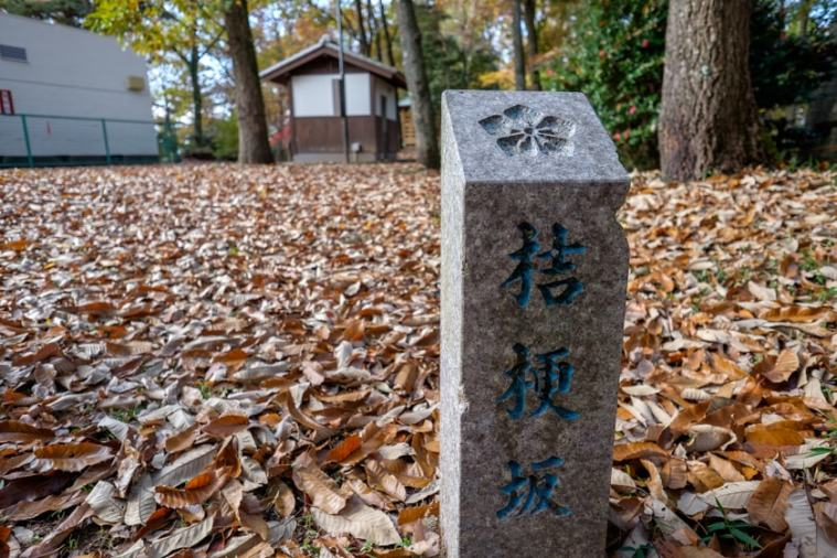 akechi_nagayama-16_9286