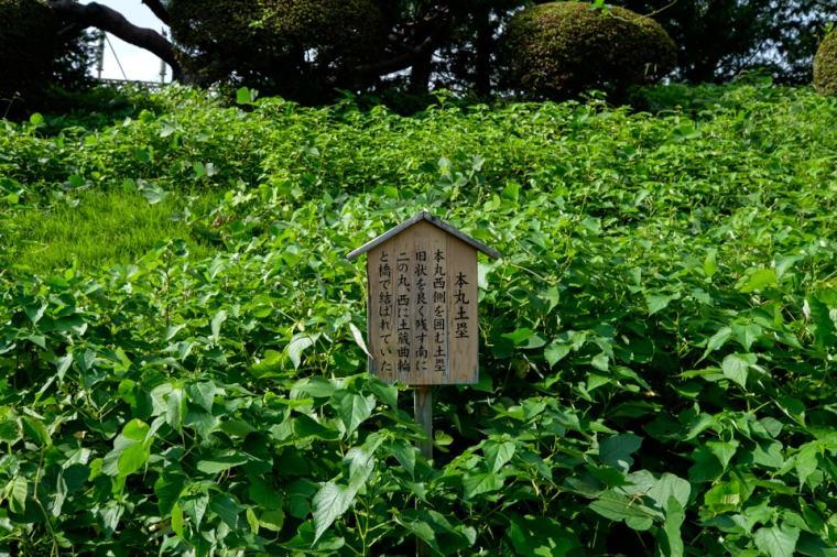 oshi-jo_35_8508